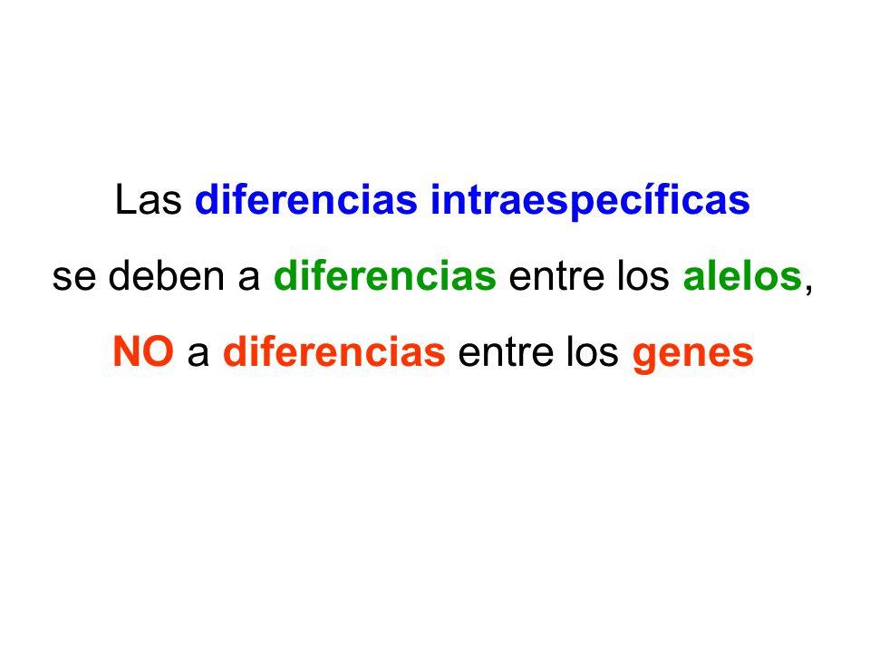 Las diferencias intraespecíficas