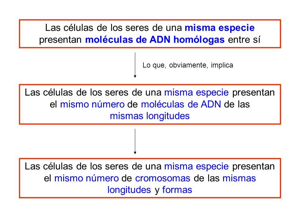 Las células de los seres de una misma especie presentan moléculas de ADN homólogas entre sí