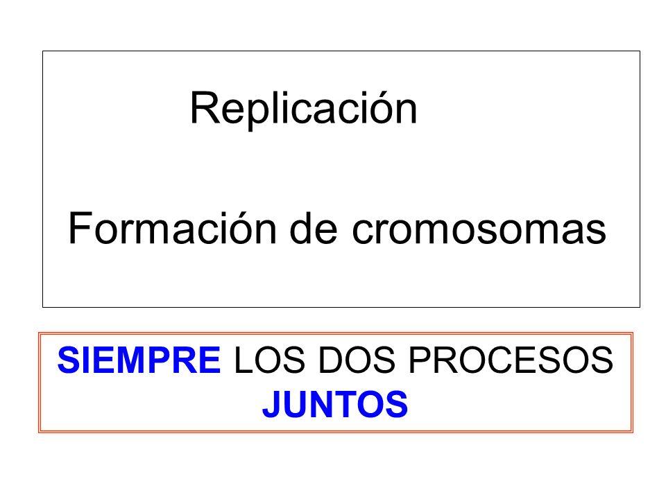 Formación de cromosomas