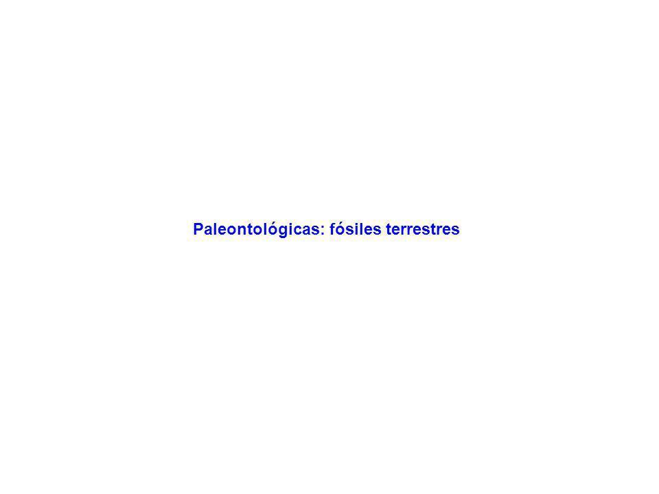 Paleontológicas: fósiles terrestres