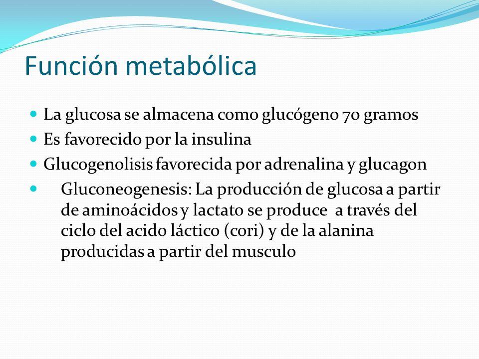 Función metabólica La glucosa se almacena como glucógeno 70 gramos