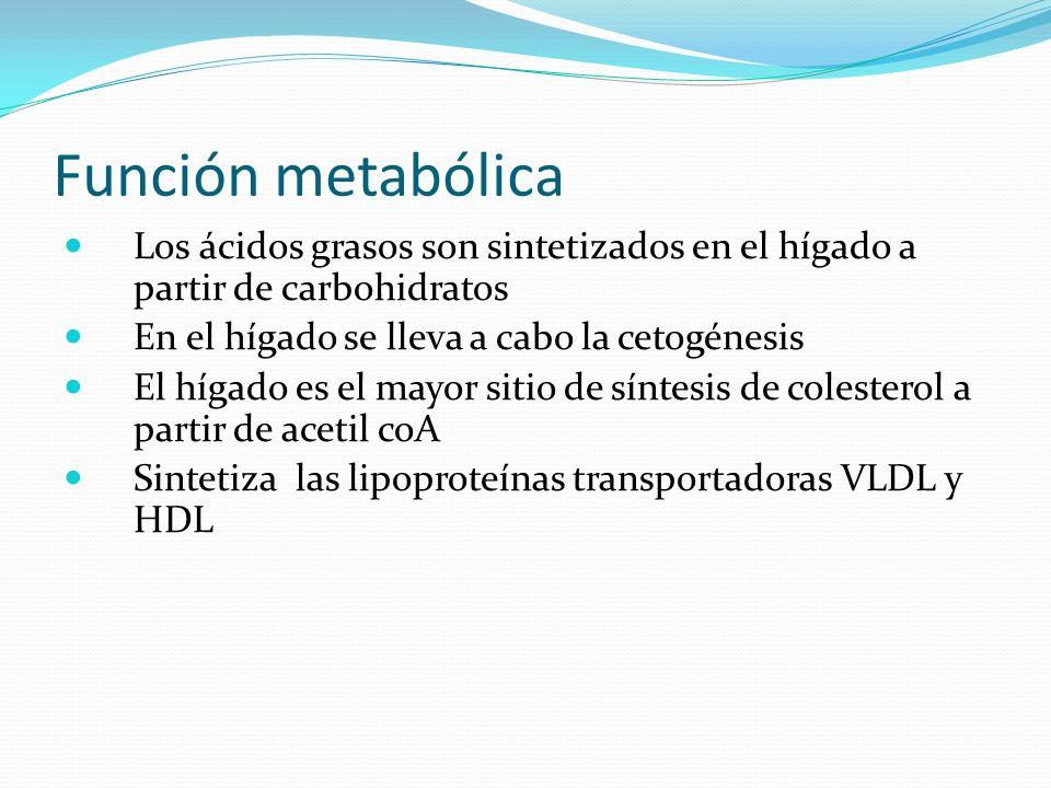 Función metabólica Los ácidos grasos son sintetizados en el hígado a partir de carbohidratos. En el hígado se lleva a cabo la cetogénesis.