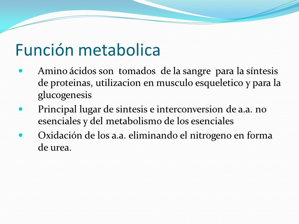 Función metabolica Amino ácidos son tomados de la sangre para la síntesis de proteinas, utilizacion en musculo esqueletico y para la glucogenesis.