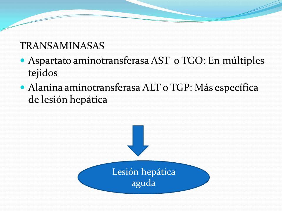 Aspartato aminotransferasa AST o TGO: En múltiples tejidos