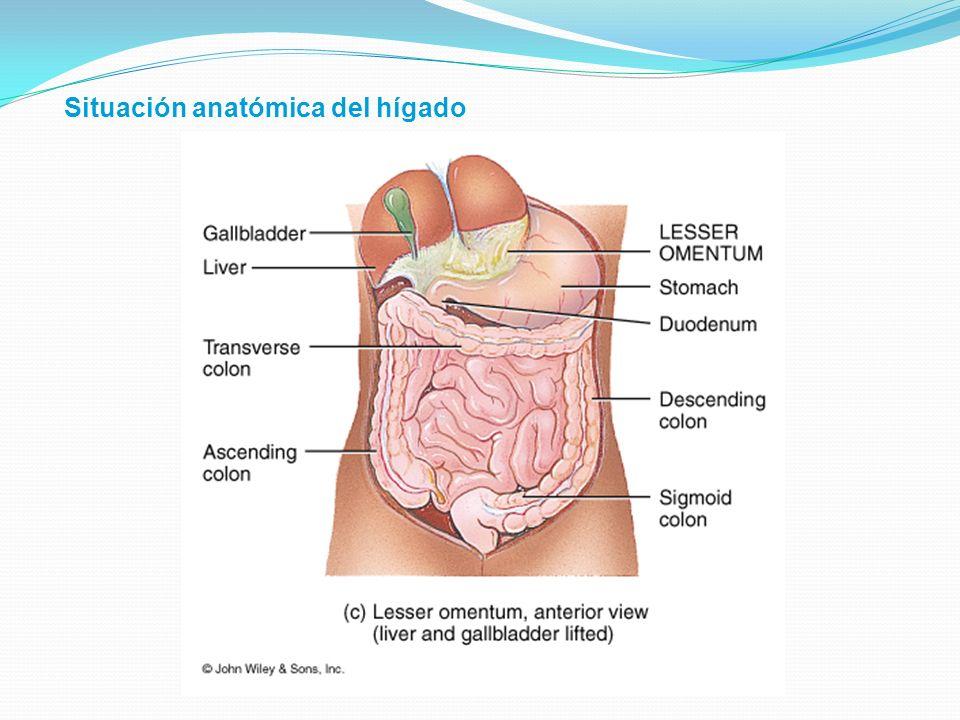 Situación anatómica del hígado