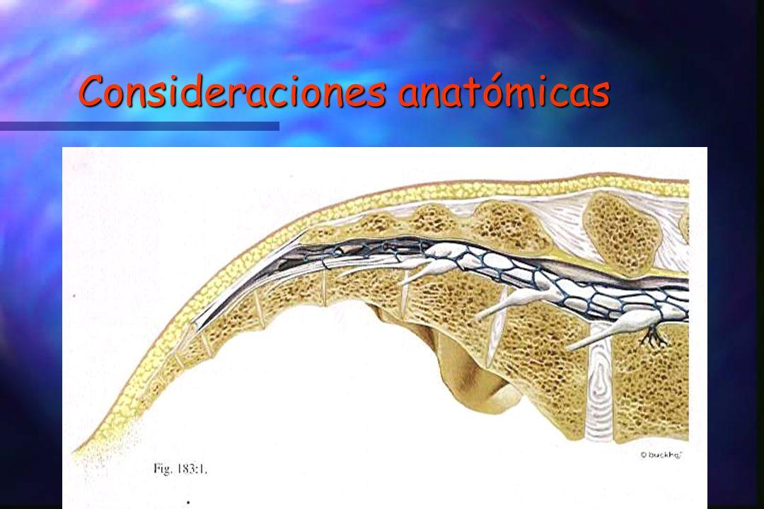 Consideraciones anatómicas