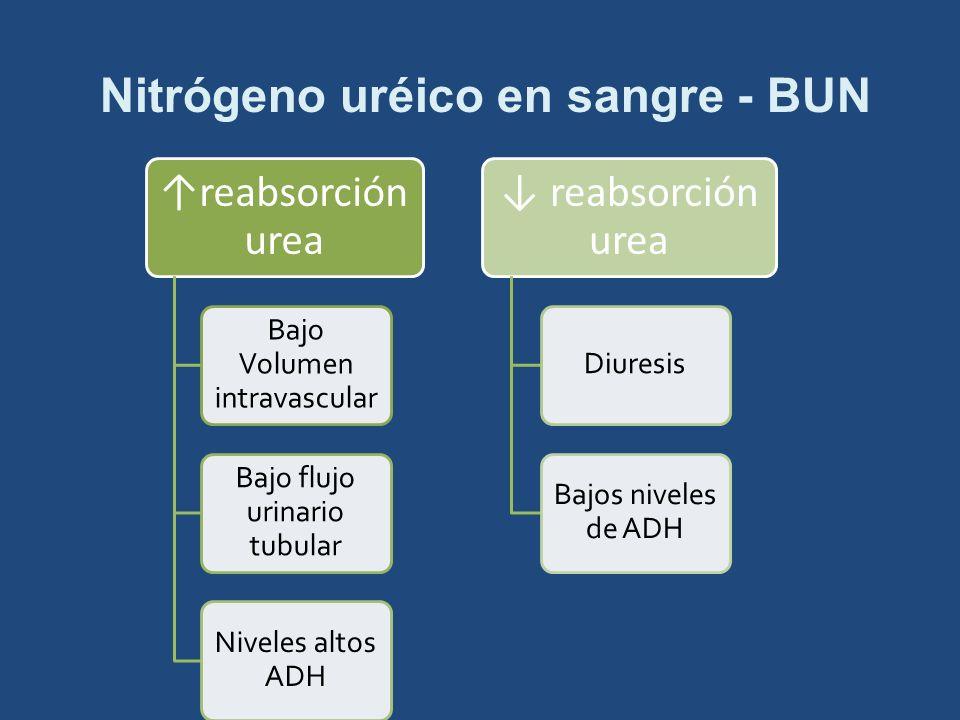 Nitrógeno uréico en sangre - BUN