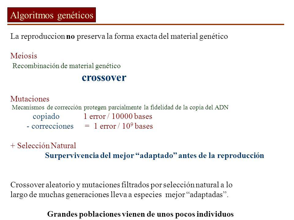 Algoritmos genéticos La reproduccion no preserva la forma exacta del material genético. Meiosis. Recombinación de material genético.
