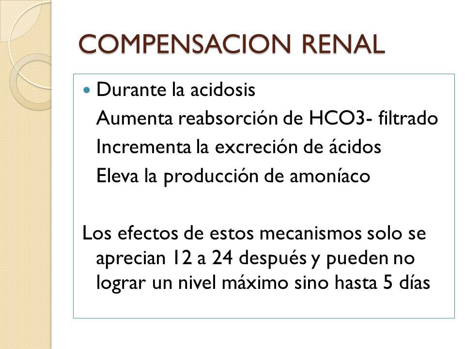 COMPENSACION RENAL Durante la acidosis