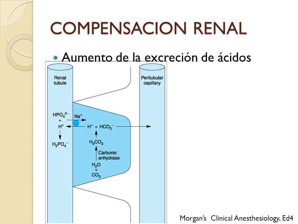 COMPENSACION RENAL Aumento de la excreción de ácidos
