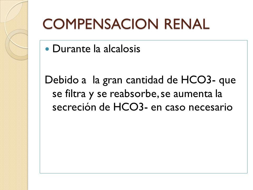 COMPENSACION RENAL Durante la alcalosis