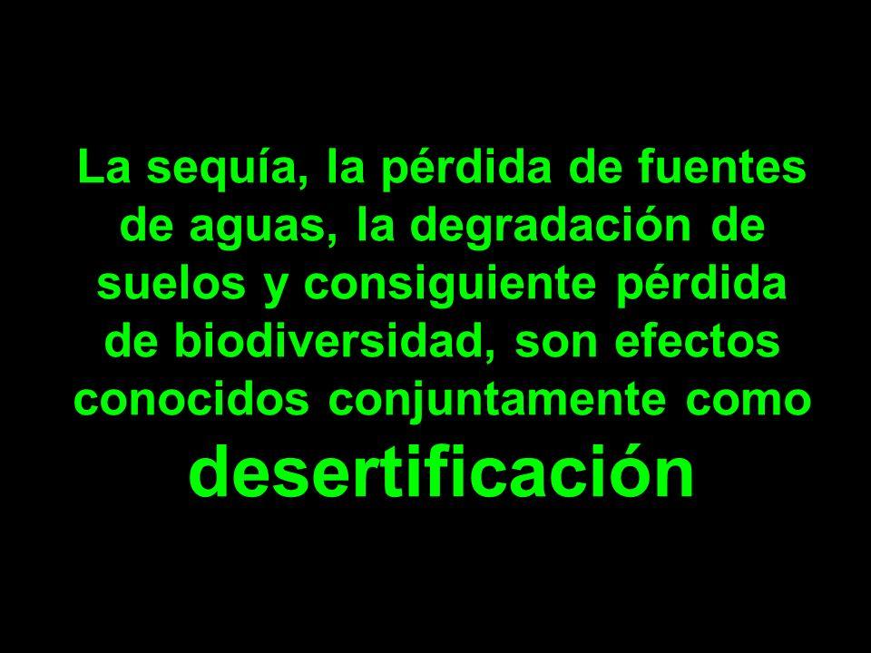 La sequía, la pérdida de fuentes de aguas, la degradación de suelos y consiguiente pérdida de biodiversidad, son efectos conocidos conjuntamente como desertificación