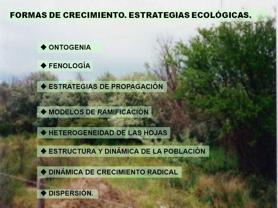 FORMAS DE CRECIMIENTO. ESTRATEGIAS ECOLÓGICAS.