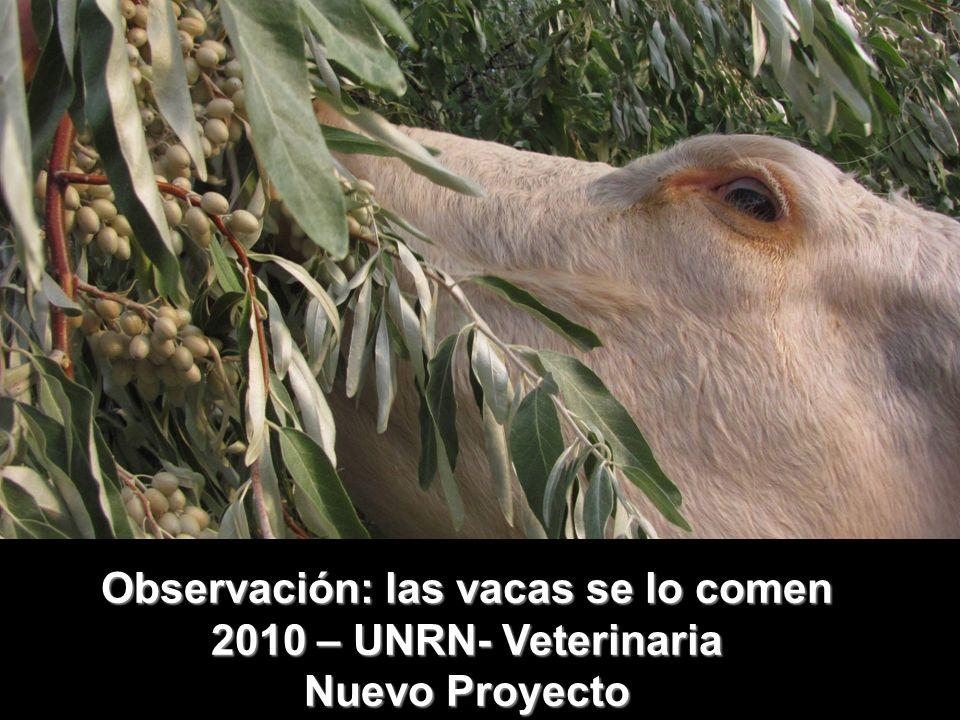 Observación: las vacas se lo comen
