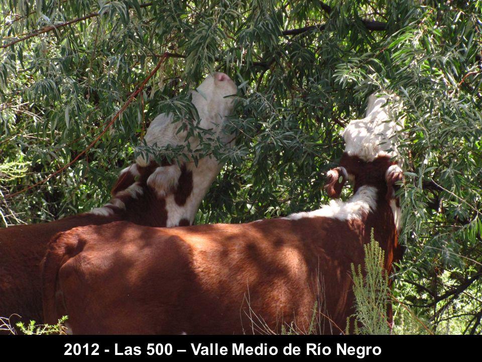 2012 - Las 500 – Valle Medio de Río Negro