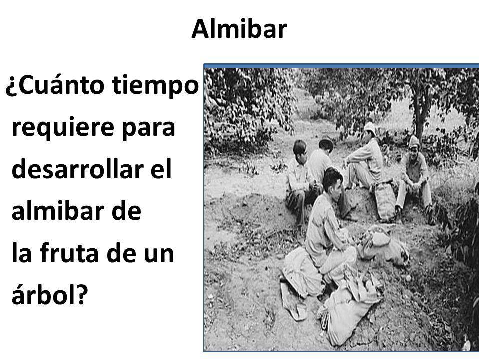 Almibar ¿Cuánto tiempo requiere para desarrollar el almibar de la fruta de un árbol