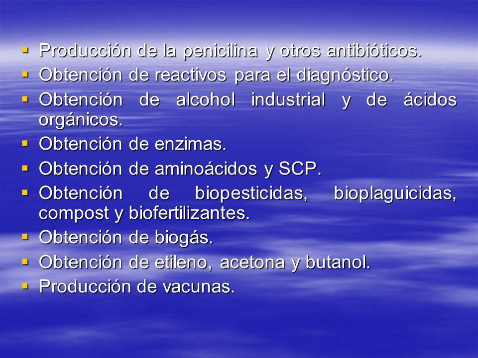 Producción de la penicilina y otros antibióticos.