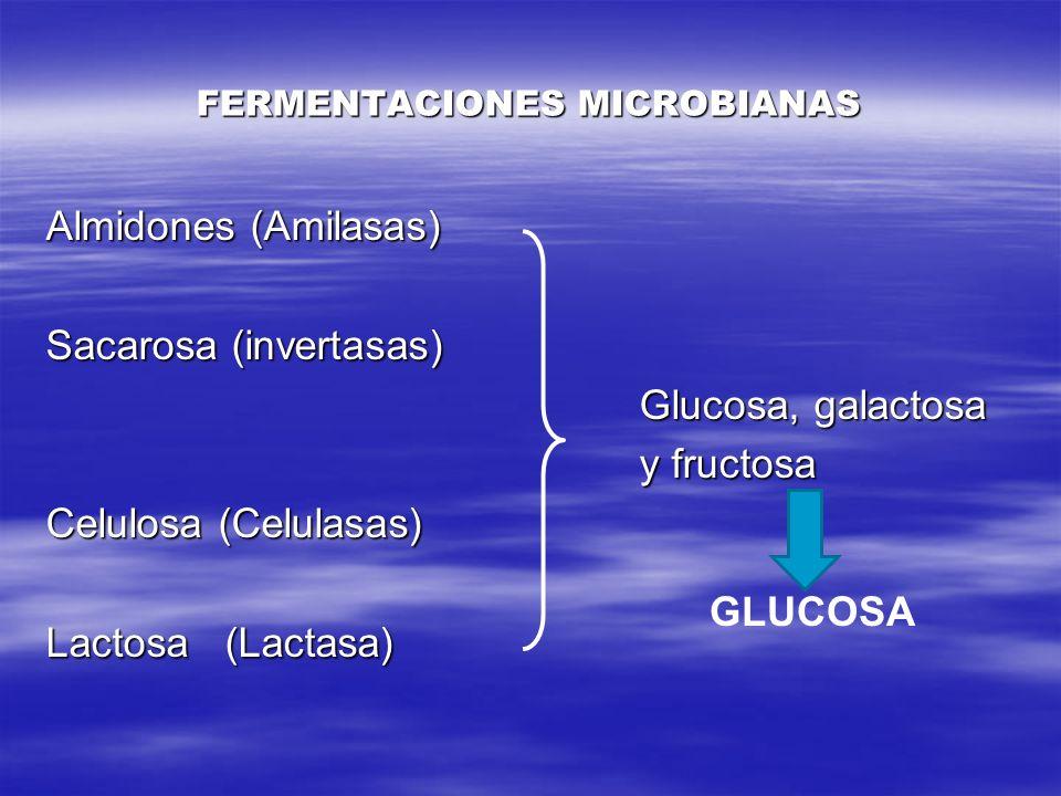 FERMENTACIONES MICROBIANAS