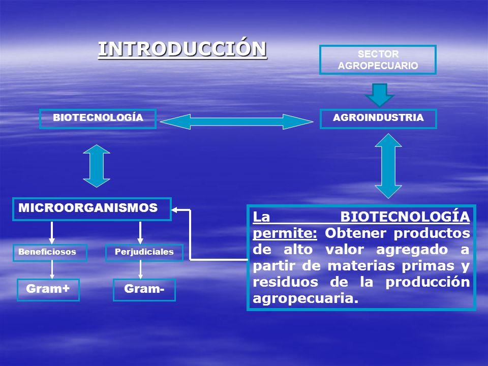 INTRODUCCIÓNSECTOR AGROPECUARIO. BIOTECNOLOGÍA. AGROINDUSTRIA. MICROORGANISMOS.