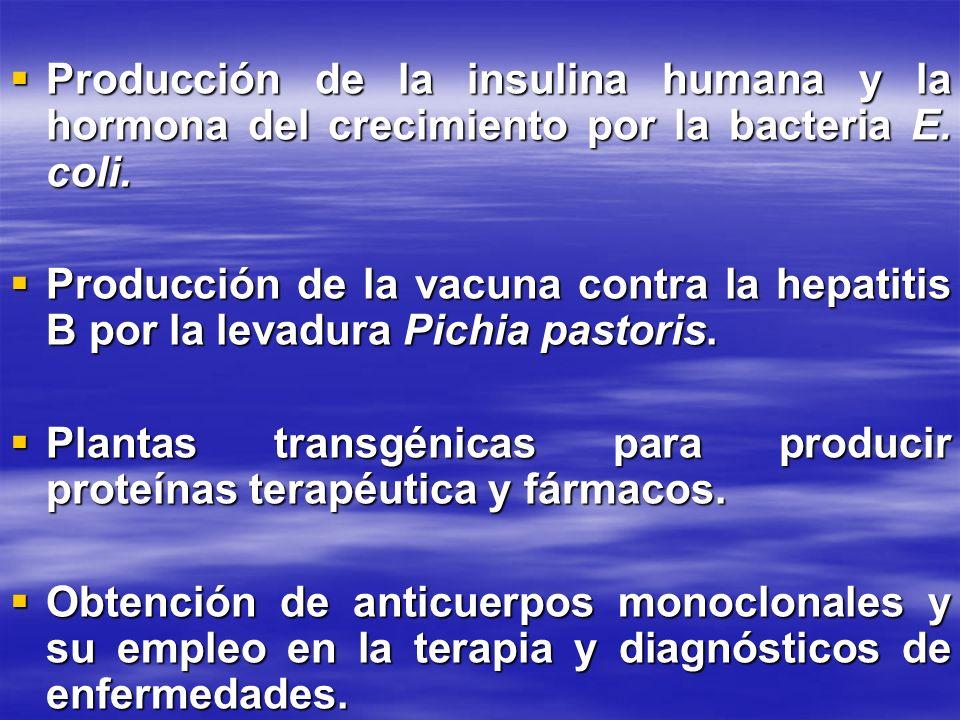 Producción de la insulina humana y la hormona del crecimiento por la bacteria E. coli.