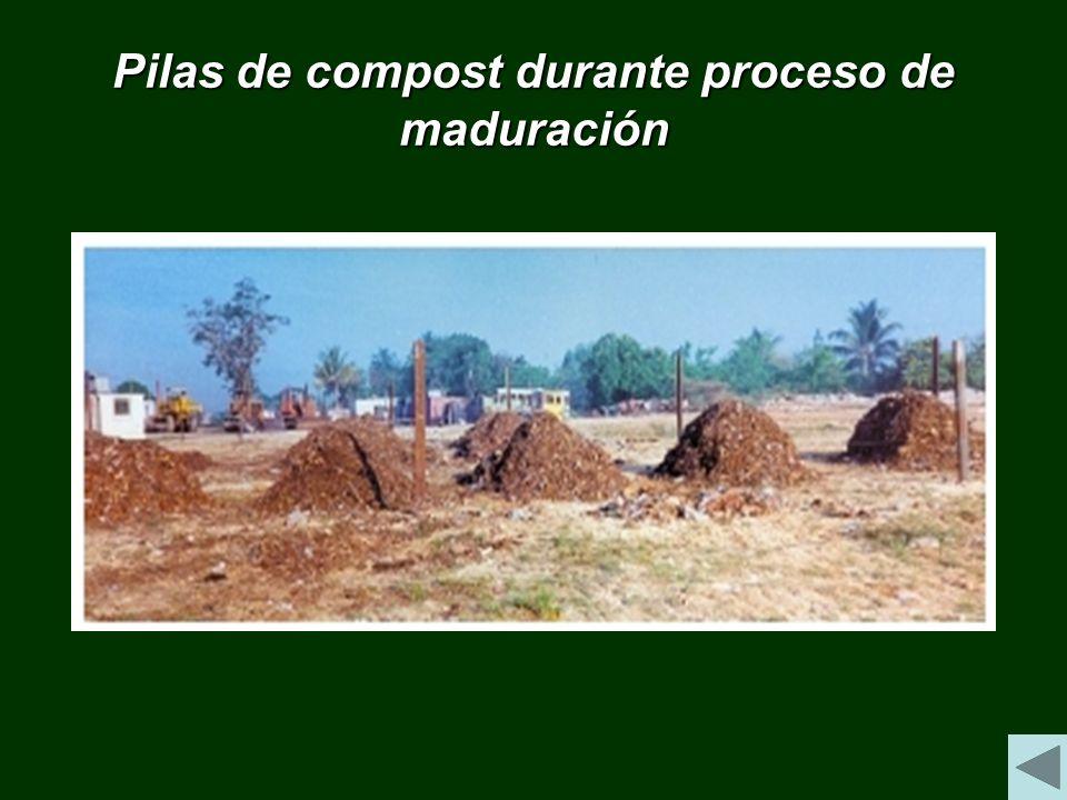 Pilas de compost durante proceso de maduración
