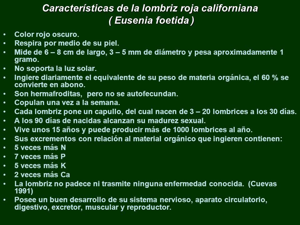 Características de la lombriz roja californiana ( Eusenia foetida )