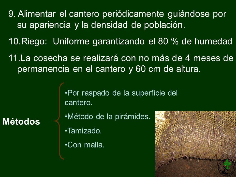 Riego: Uniforme garantizando el 80 % de humedad