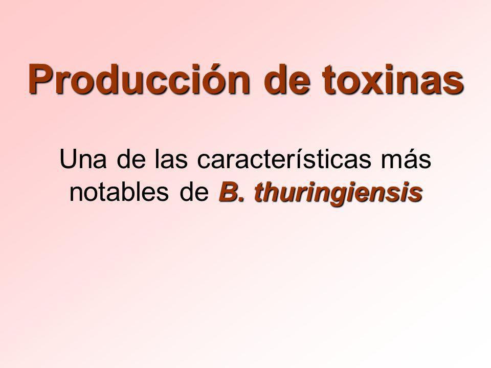 Una de las características más notables de B. thuringiensis
