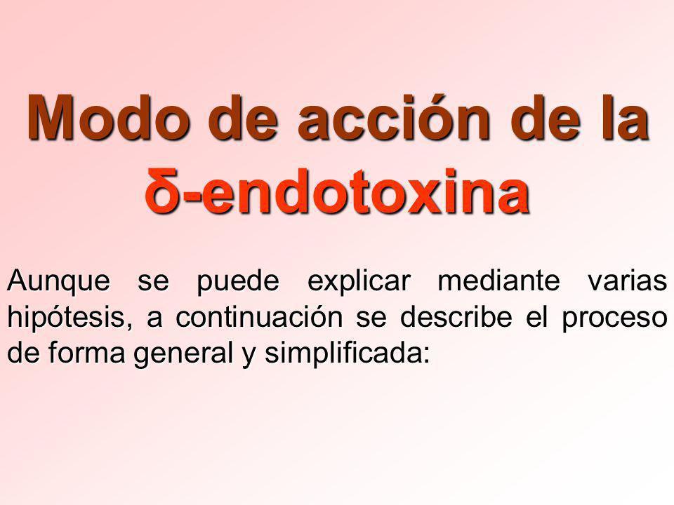 Modo de acción de la δ-endotoxina