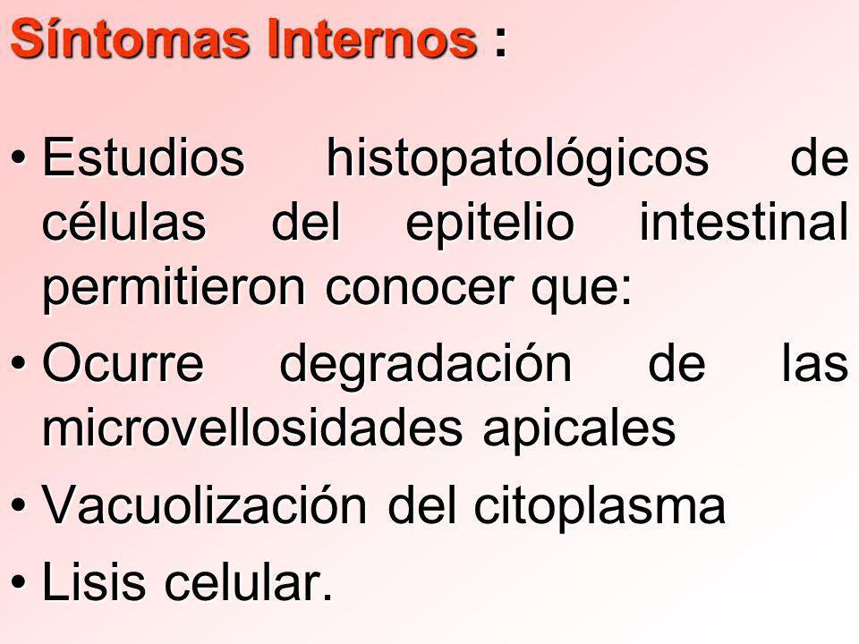 Síntomas Internos : Estudios histopatológicos de células del epitelio intestinal permitieron conocer que: