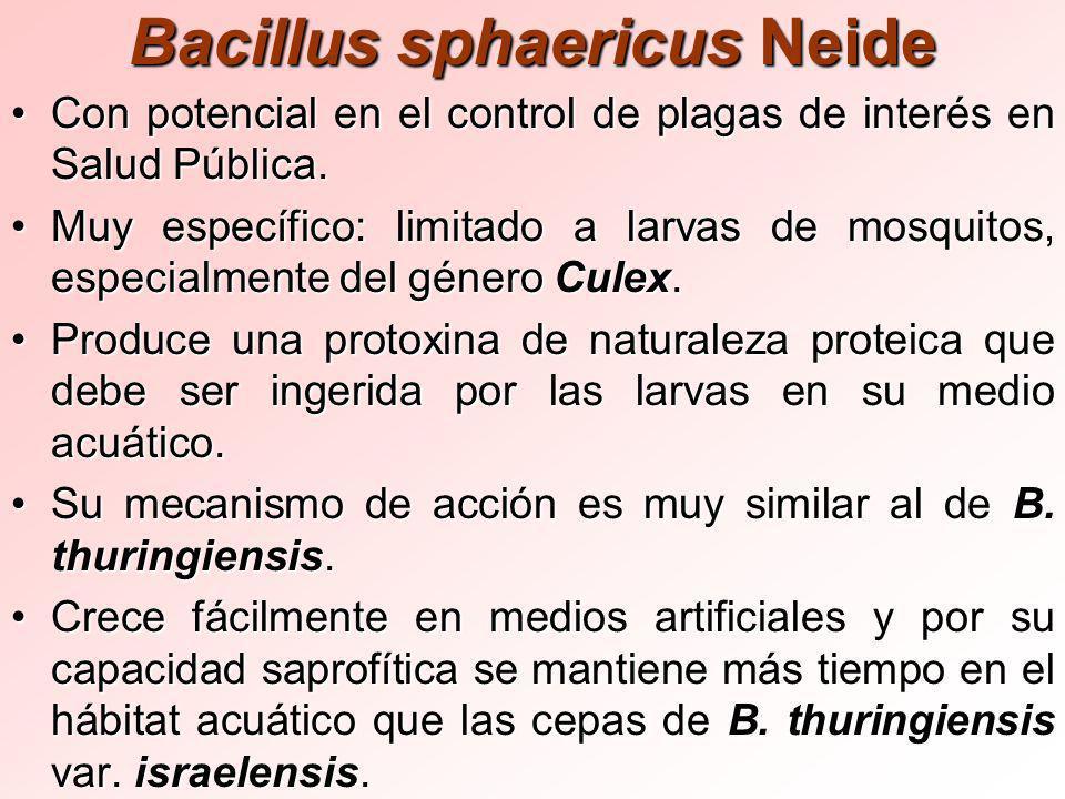 Bacillus sphaericus Neide