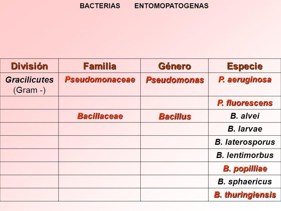 BACTERIAS ENTOMOPATOGENAS