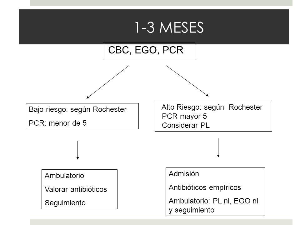 1-3 MESES CBC, EGO, PCR Alto Riesgo: según Rochester