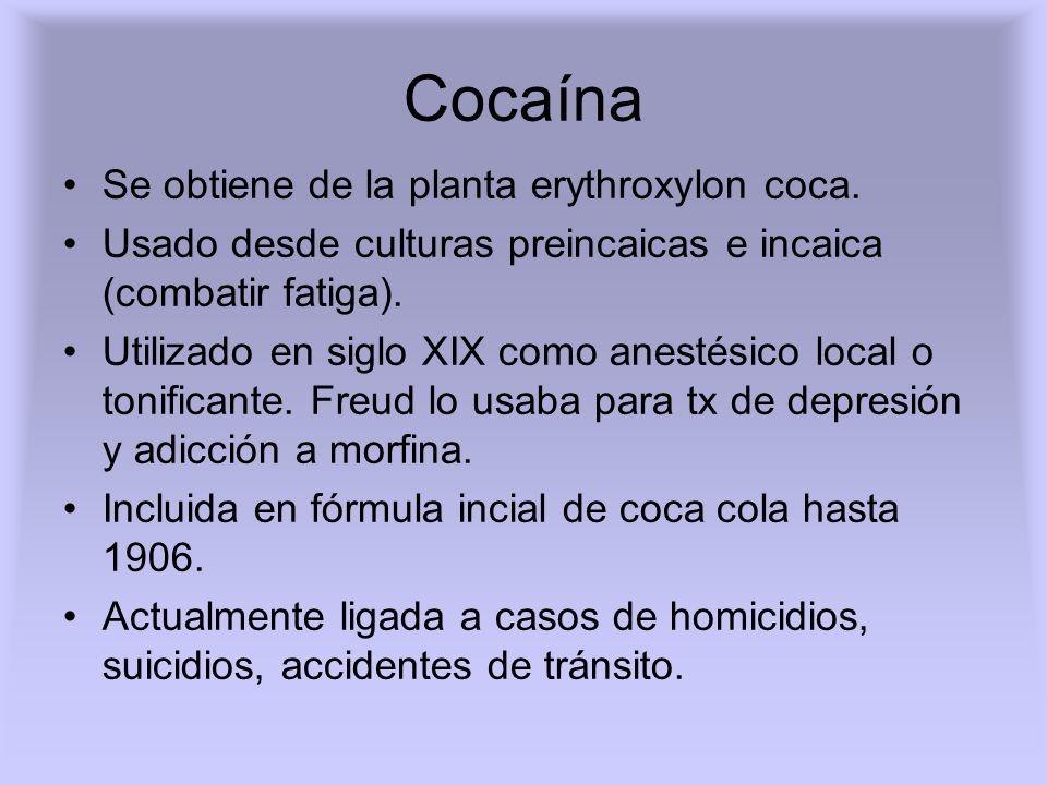 Cocaína Se obtiene de la planta erythroxylon coca.