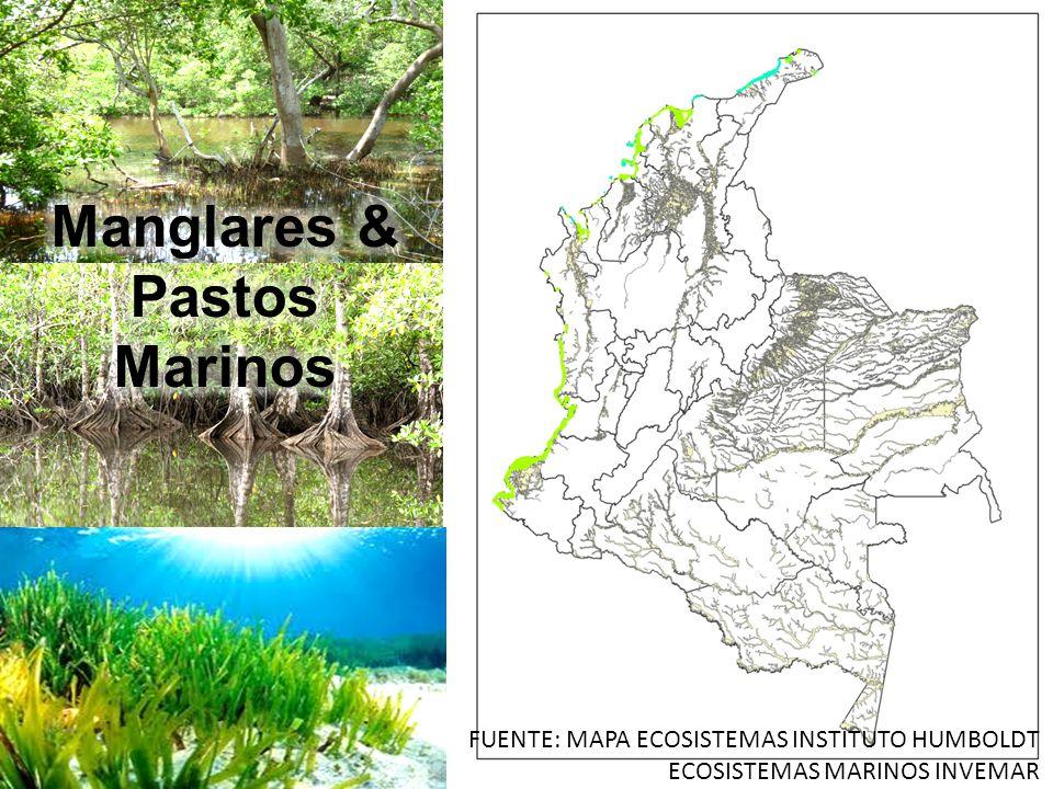 Manglares & Pastos Marinos