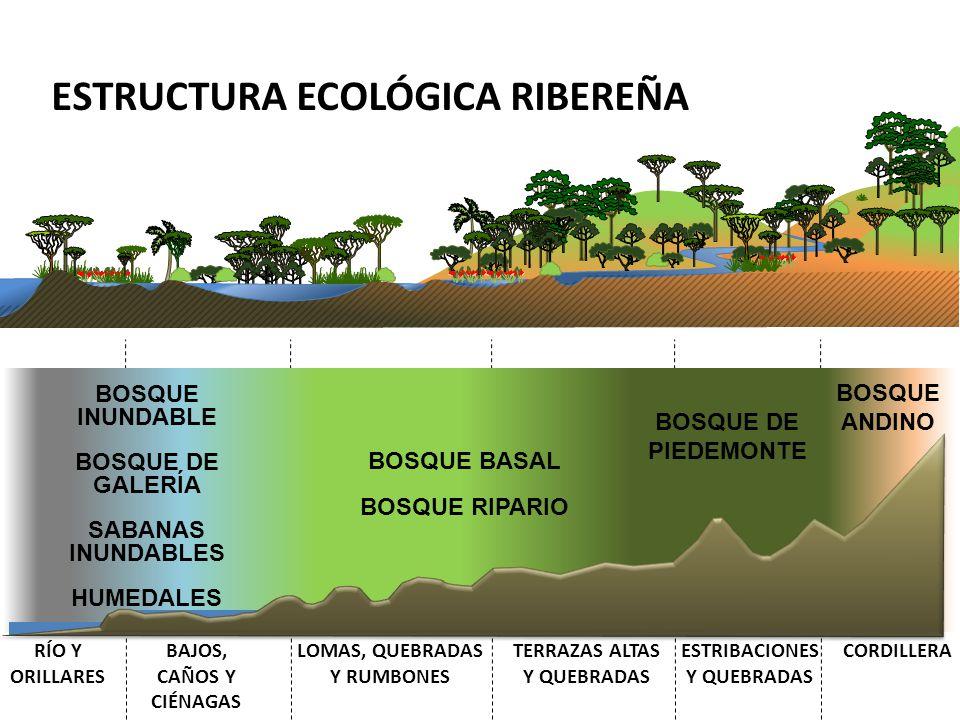ESTRUCTURA ECOLÓGICA RIBEREÑA