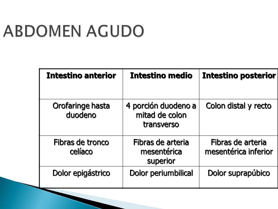 ABDOMEN AGUDO Intestino anterior Intestino medio Intestino posterior