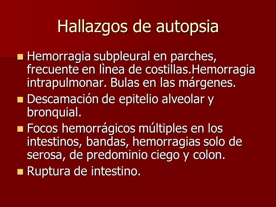 Hallazgos de autopsia Hemorragia subpleural en parches, frecuente en lìnea de costillas.Hemorragia intrapulmonar. Bulas en las márgenes.