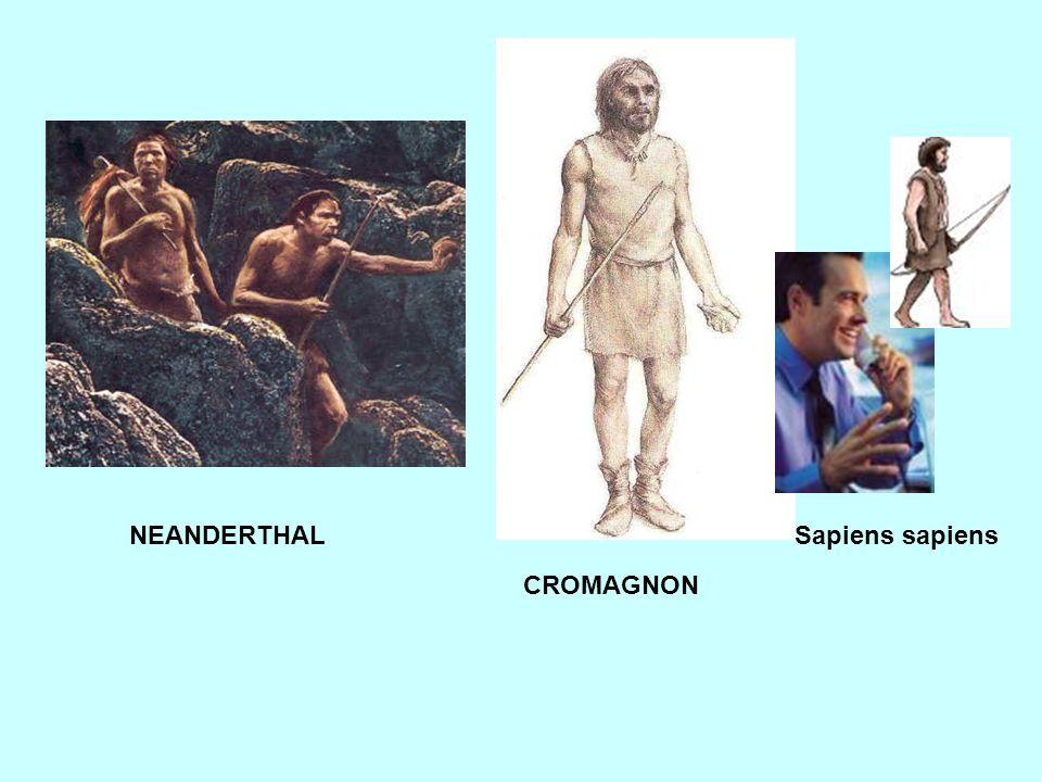 NEANDERTHAL Sapiens sapiens CROMAGNON