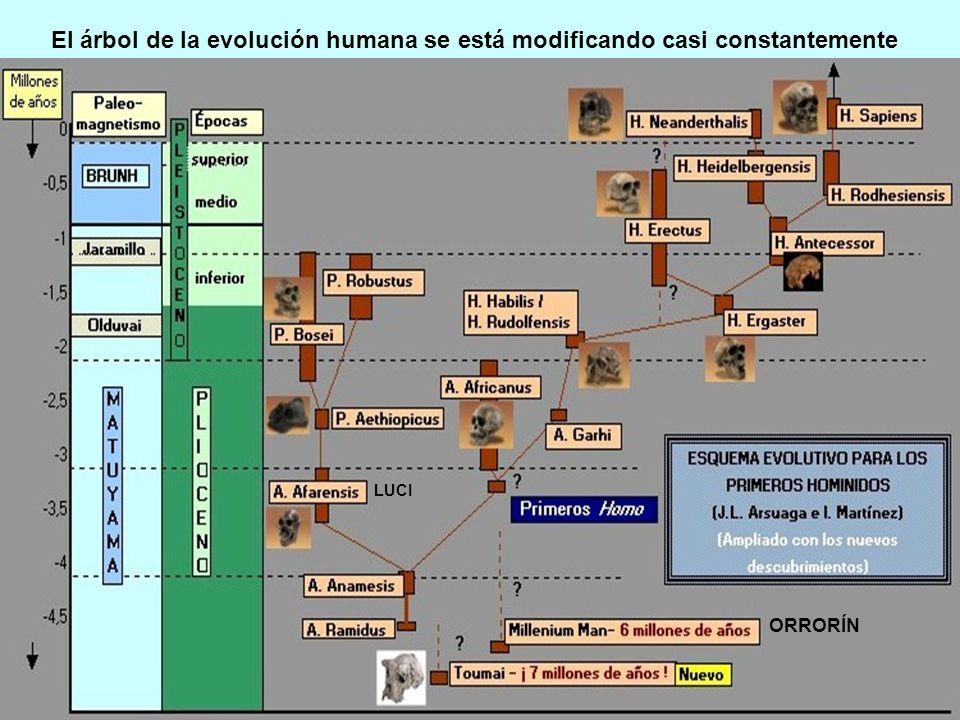 El árbol de la evolución humana se está modificando casi constantemente