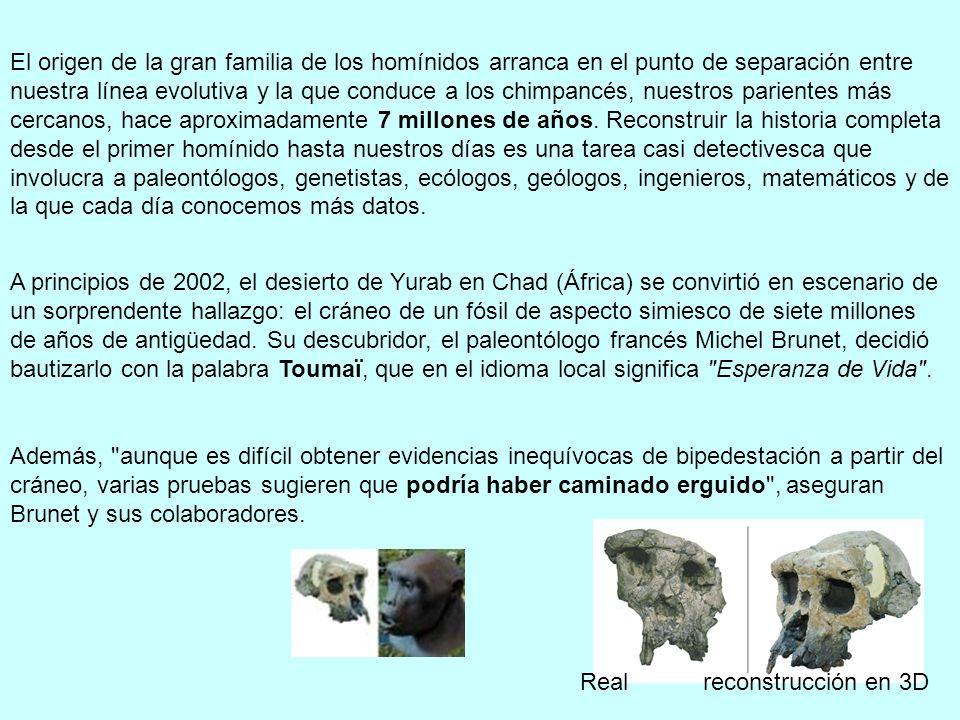 El origen de la gran familia de los homínidos arranca en el punto de separación entre nuestra línea evolutiva y la que conduce a los chimpancés, nuestros parientes más cercanos, hace aproximadamente 7 millones de años. Reconstruir la historia completa desde el primer homínido hasta nuestros días es una tarea casi detectivesca que involucra a paleontólogos, genetistas, ecólogos, geólogos, ingenieros, matemáticos y de la que cada día conocemos más datos.
