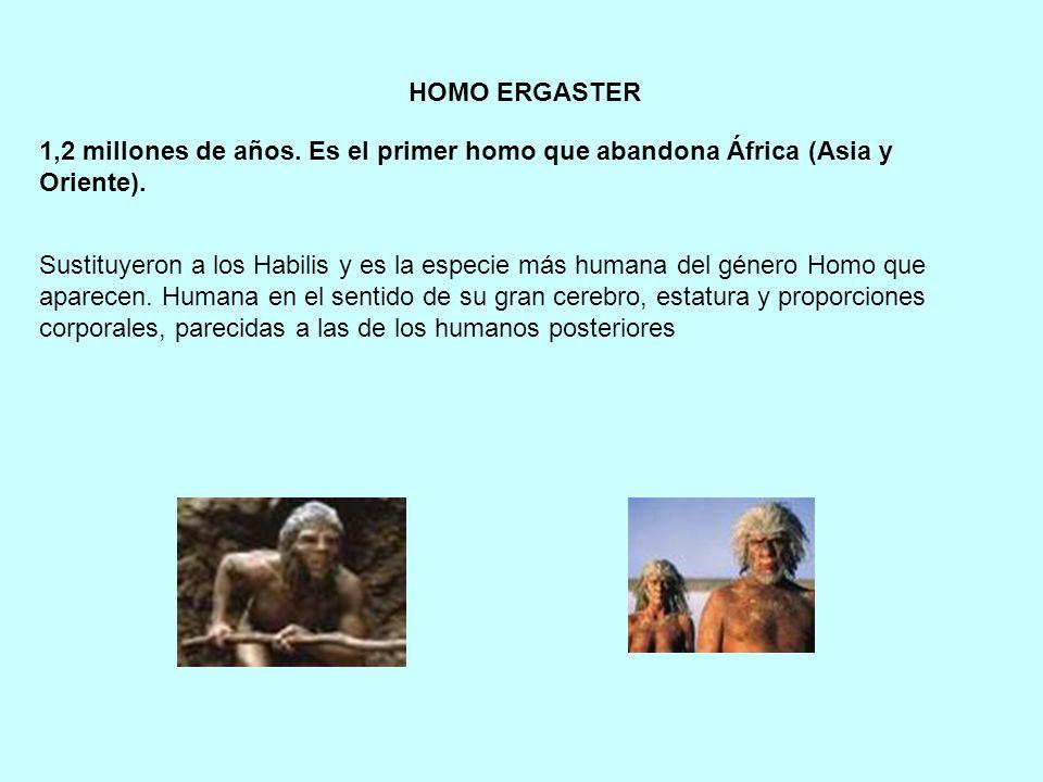 HOMO ERGASTER 1,2 millones de años. Es el primer homo que abandona África (Asia y Oriente).