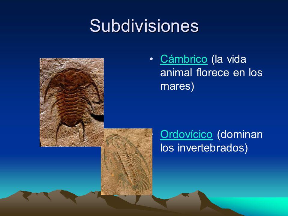 Subdivisiones Cámbrico (la vida animal florece en los mares)