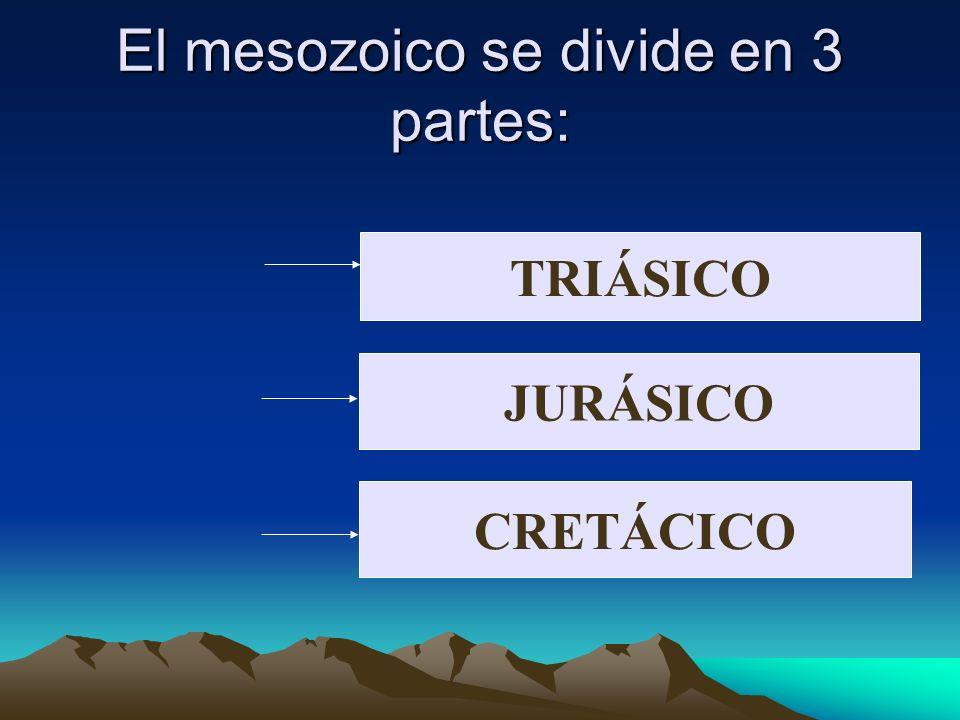 El mesozoico se divide en 3 partes: