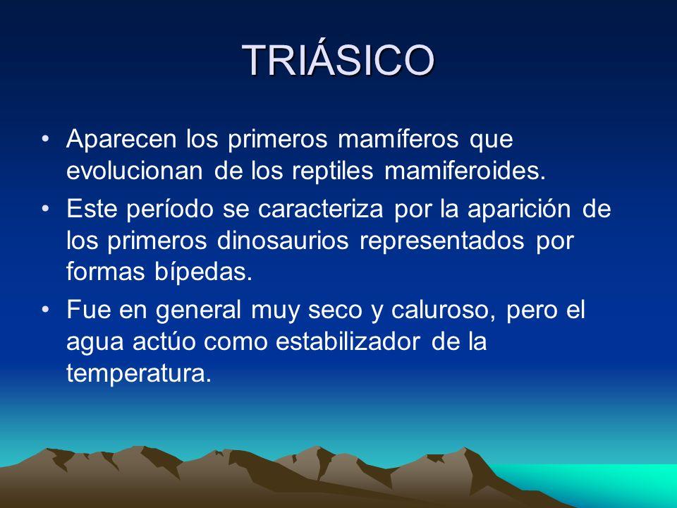 TRIÁSICOAparecen los primeros mamíferos que evolucionan de los reptiles mamiferoides.