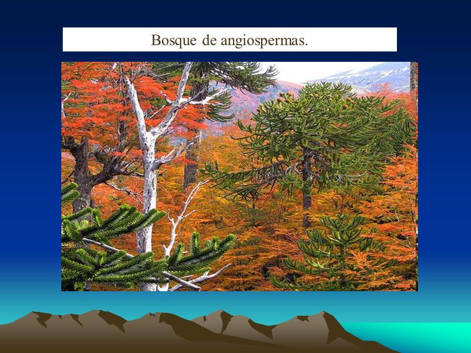 Bosque de angiospermas.