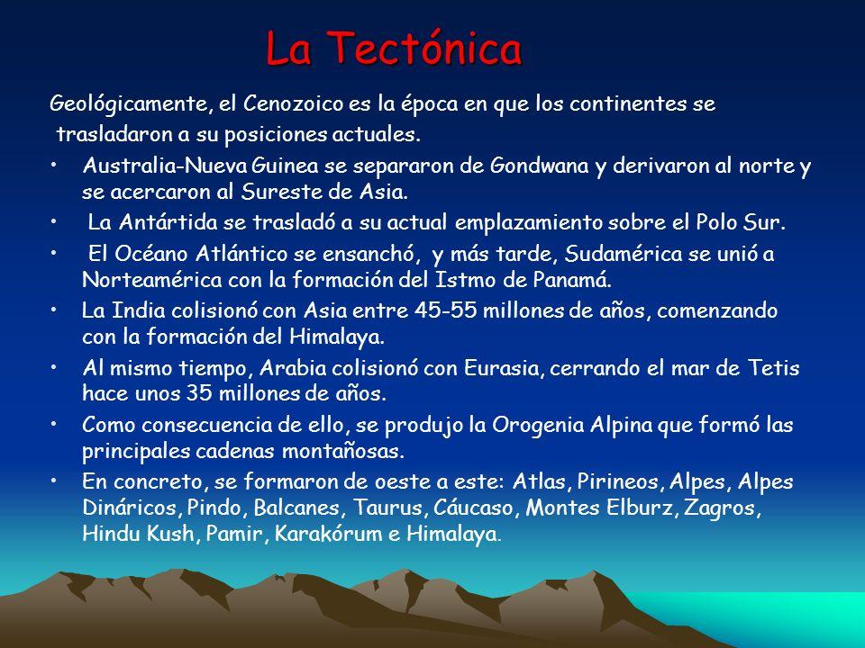 La TectónicaGeológicamente, el Cenozoico es la época en que los continentes se. trasladaron a su posiciones actuales.