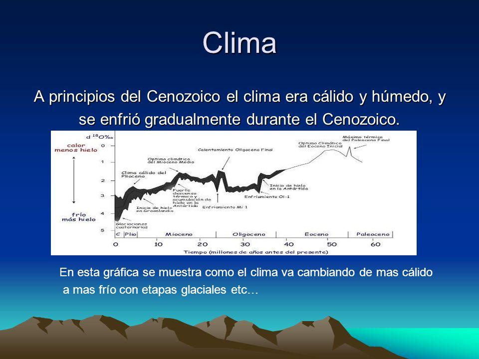 Clima A principios del Cenozoico el clima era cálido y húmedo, y