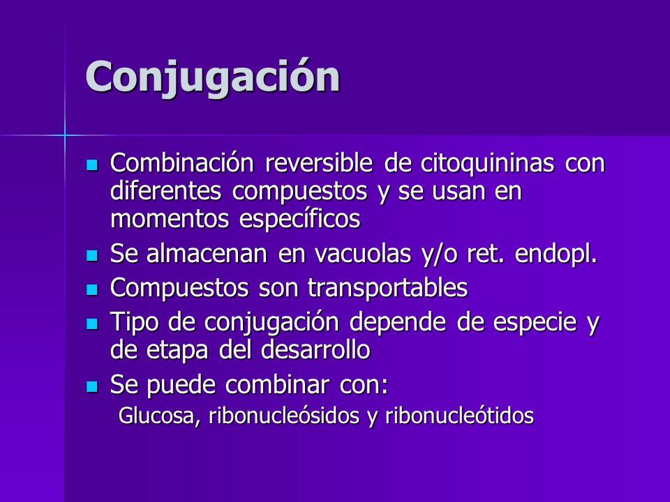 Conjugación Combinación reversible de citoquininas con diferentes compuestos y se usan en momentos específicos.