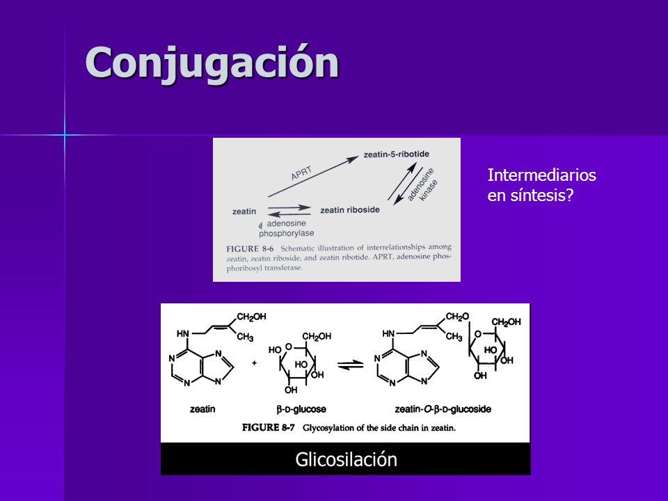 Conjugación Intermediarios en síntesis